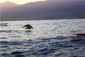 lovina dolphin tour bali
